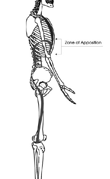 ZOA = vertical distance between rib attachment of diaphragm and the top of its dome.