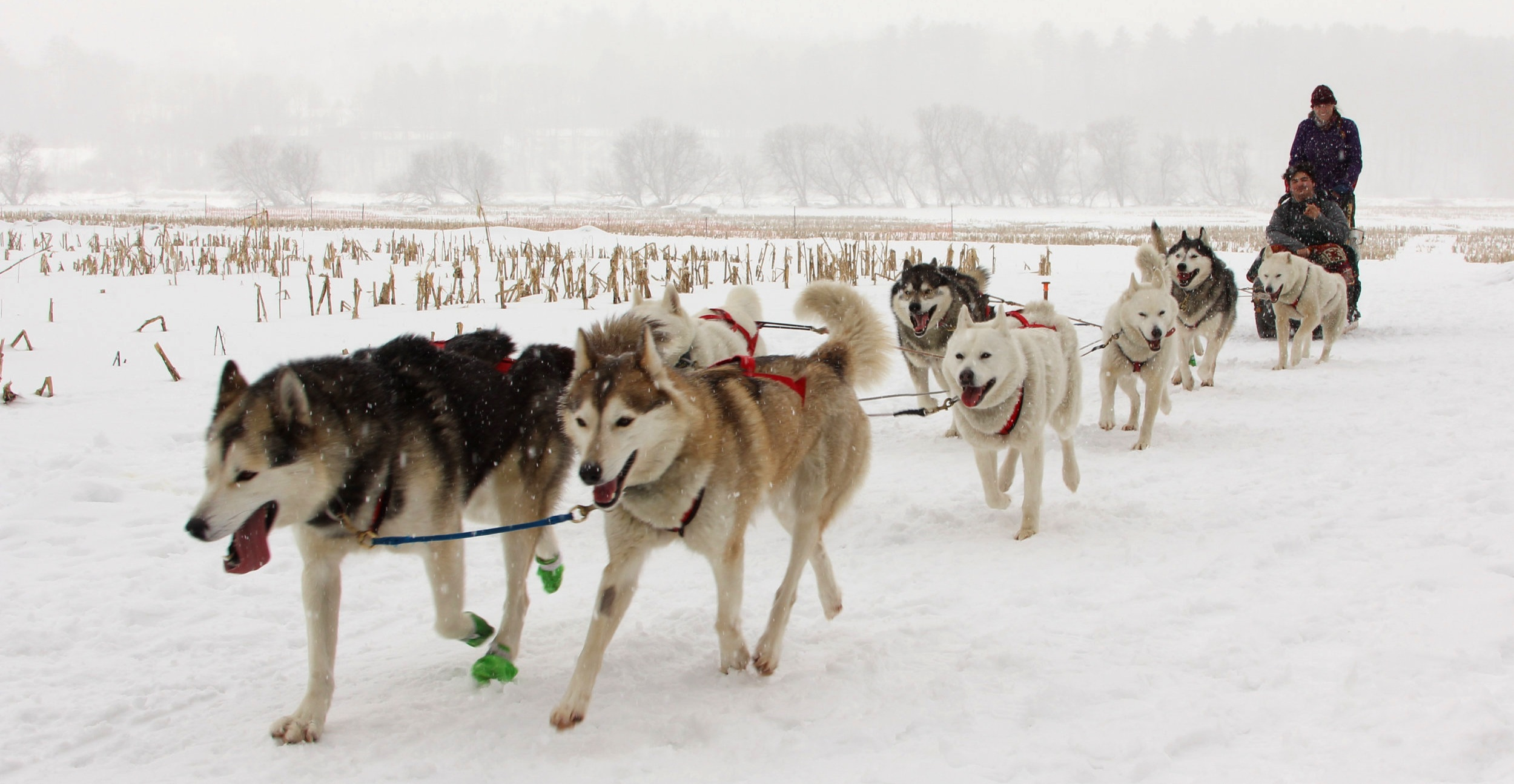 02212019DogSledding-136.jpg