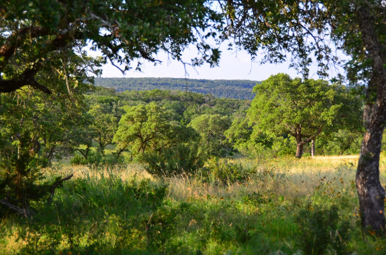land-for-sale-new-braunfels-tx-78132-bear-creek-trail (1).jpg