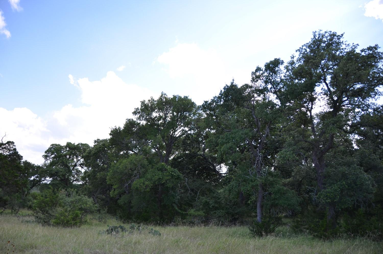 land-for-sale-new-braunfels-tx-78132-bear-creek-trail (2).jpg