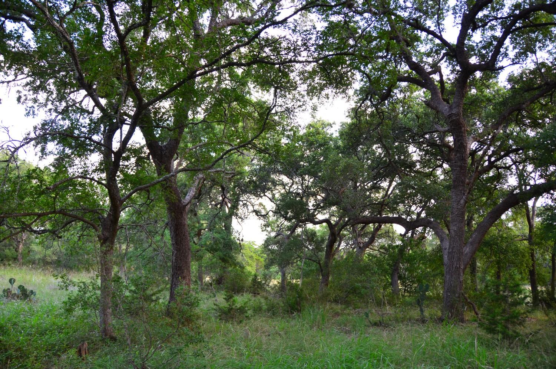 land-for-sale-new-braunfels-tx-78132-bear-creek-trail (3).jpg
