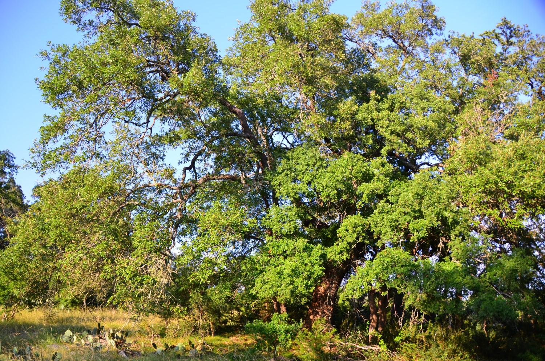 land-for-sale-new-braunfels-tx-78132-bear-creek-trail (5).jpg