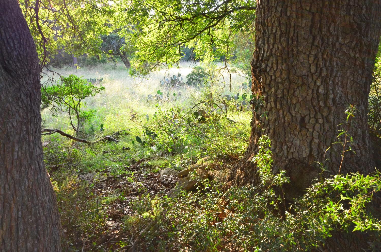 land-for-sale-new-braunfels-tx-78132-bear-creek-trail (7).jpg