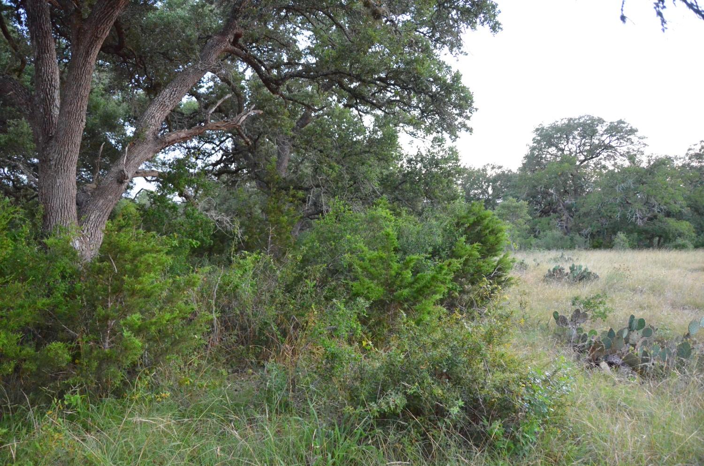 land-for-sale-new-braunfels-tx-78132-bear-creek-trail (9).jpg