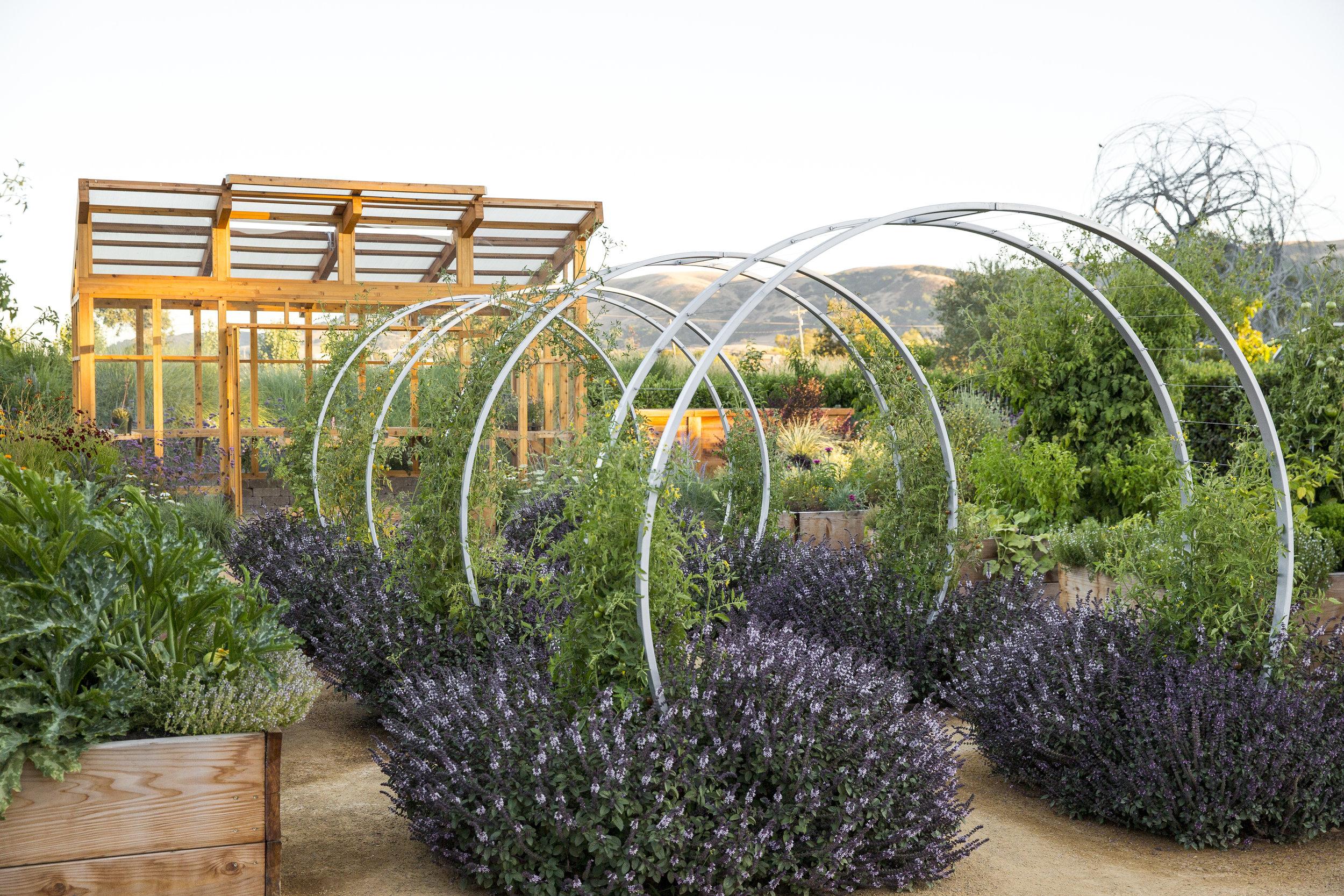 Homestead Design Collective Edible Landscaping Design Install