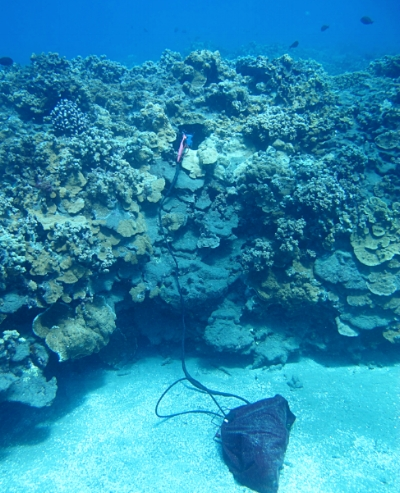 Investigating a hole inside the reef matrix using a GoPro on a selfie stick and a pH and temperature sensor attached to a data logger (SeaFET inside the gear bag) in a coral reef of West Maui, Hawaii.
