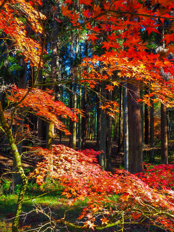 Eastwoodhill Arboretum, Gisborne, NZ. 1/160sec, f/5, ISO 800