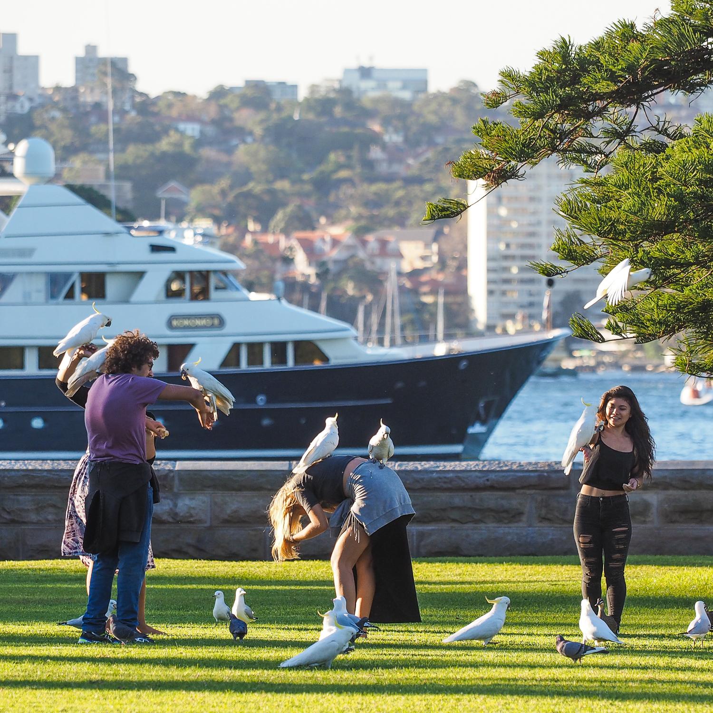 Sydney, Australia. May 2016. 1/500 sec, f/3.5, ISO 200