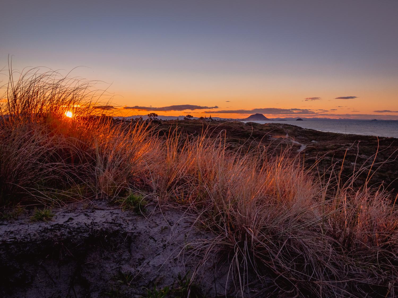 Last light in the dunes. P9107806