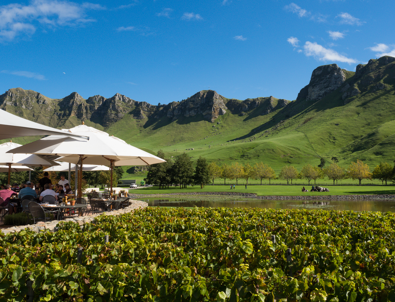 Craggy Range Vineyard & Winery, Havelock North.