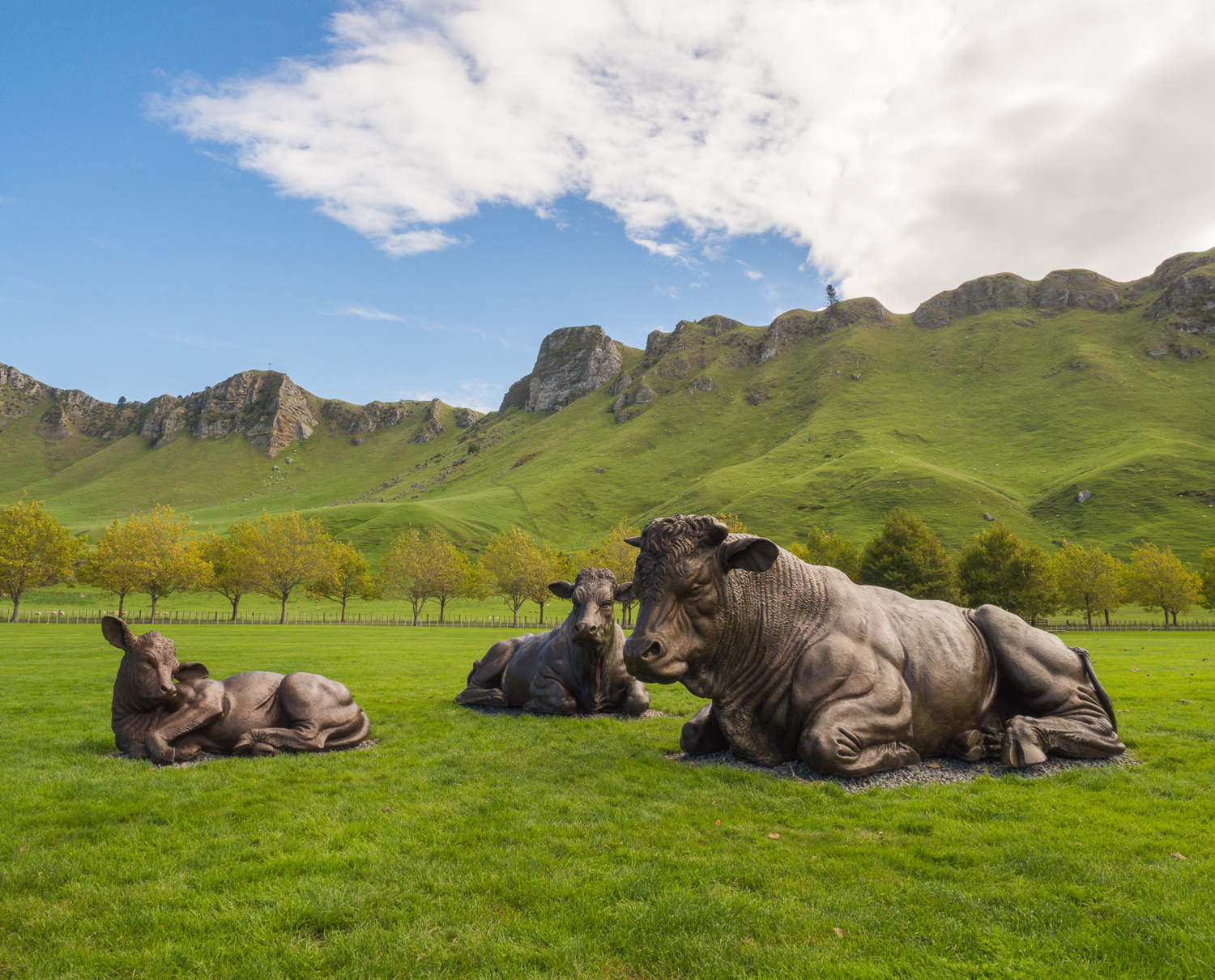 Craggy Range Vineyard & Winery, Havelock North. A family of charolais cattle sculptures by acclaimed British sculptor Paul Day.