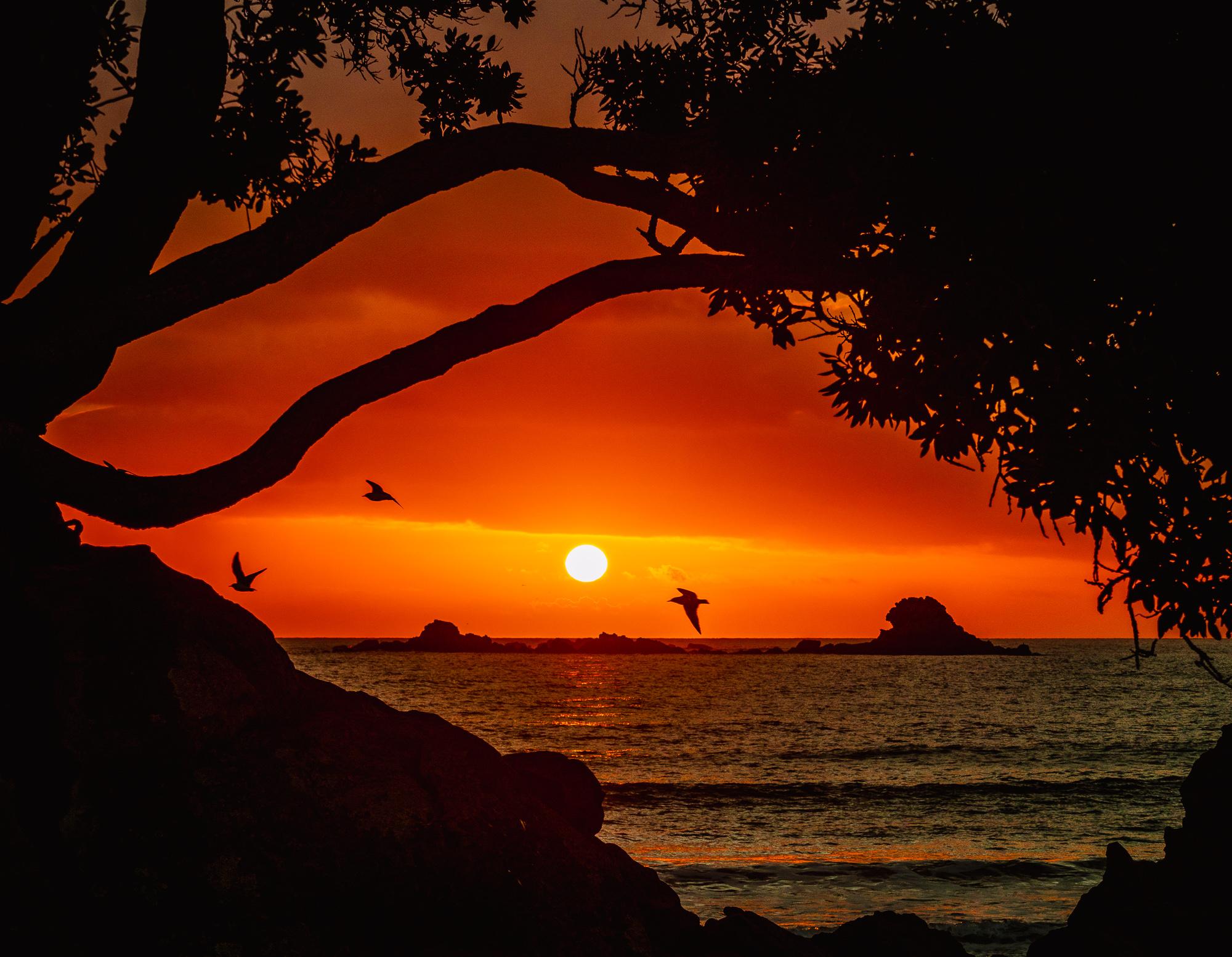Dawn framed. Mount Maunganui Beach. P7130025