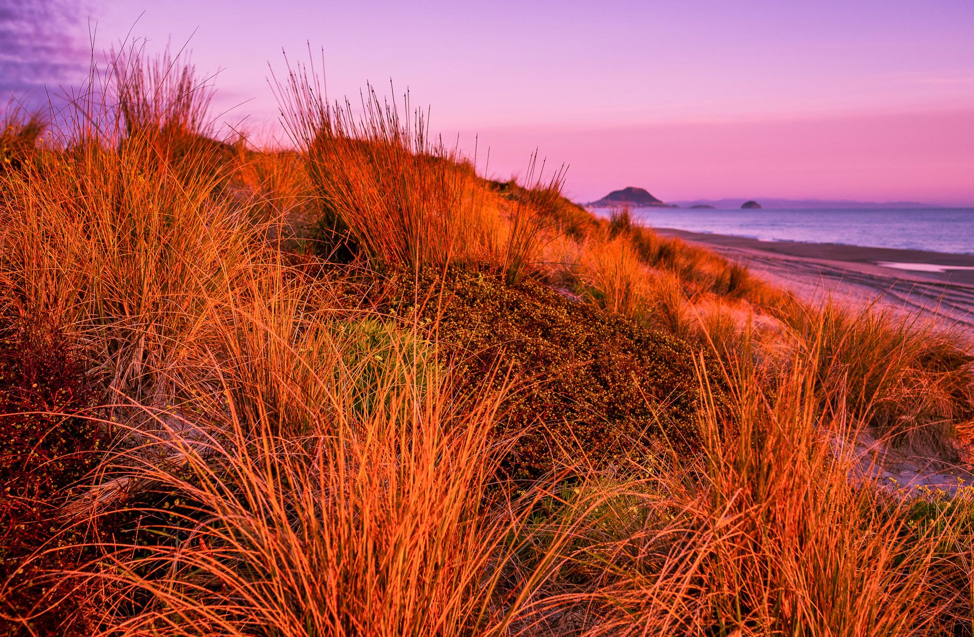 Spring dawn. Papamoa Beach. P9010018