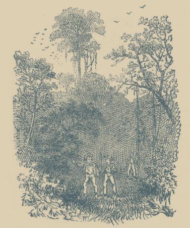 Jackson's Island