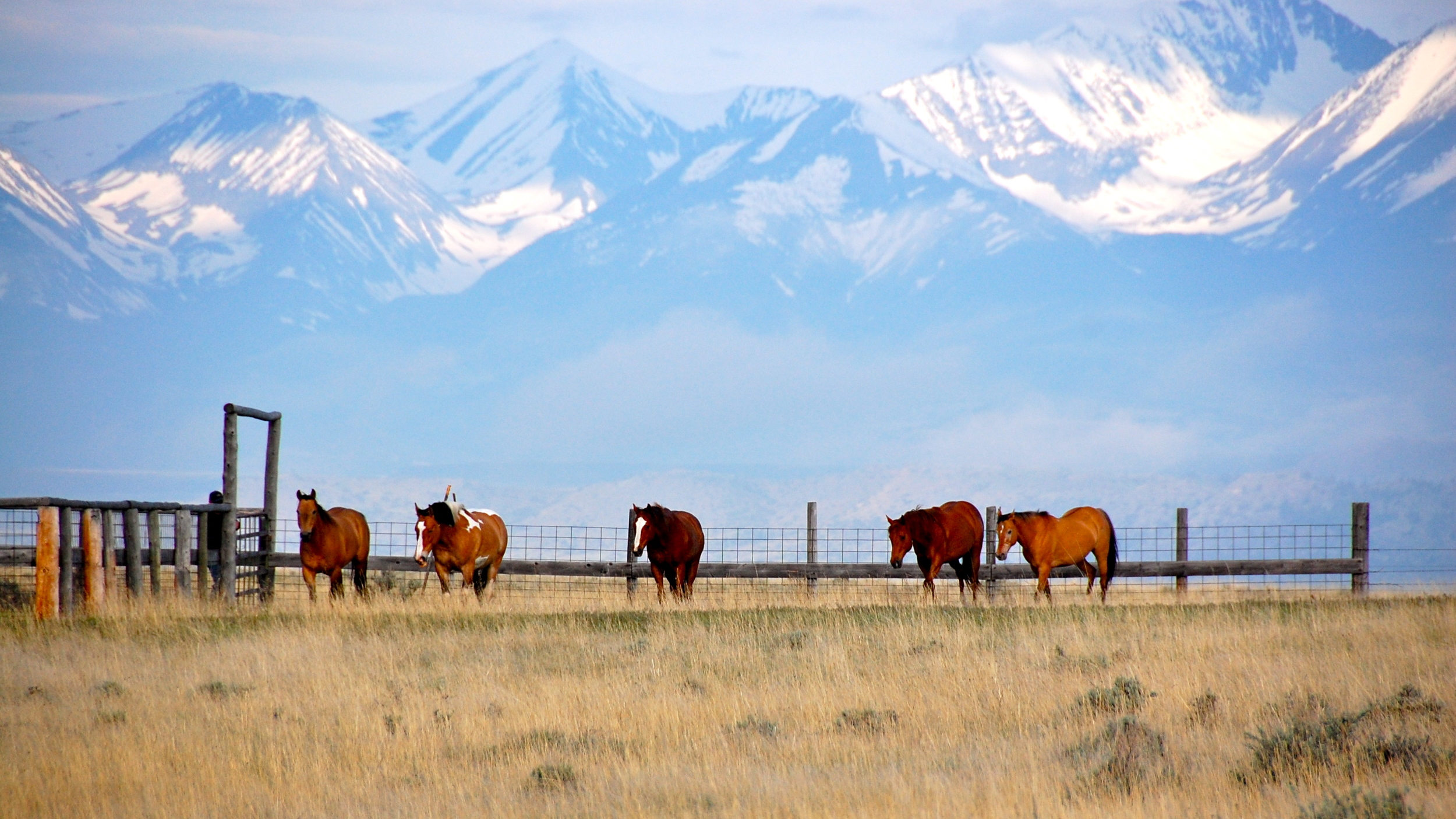Horses on Montana ranch with mountains in the background