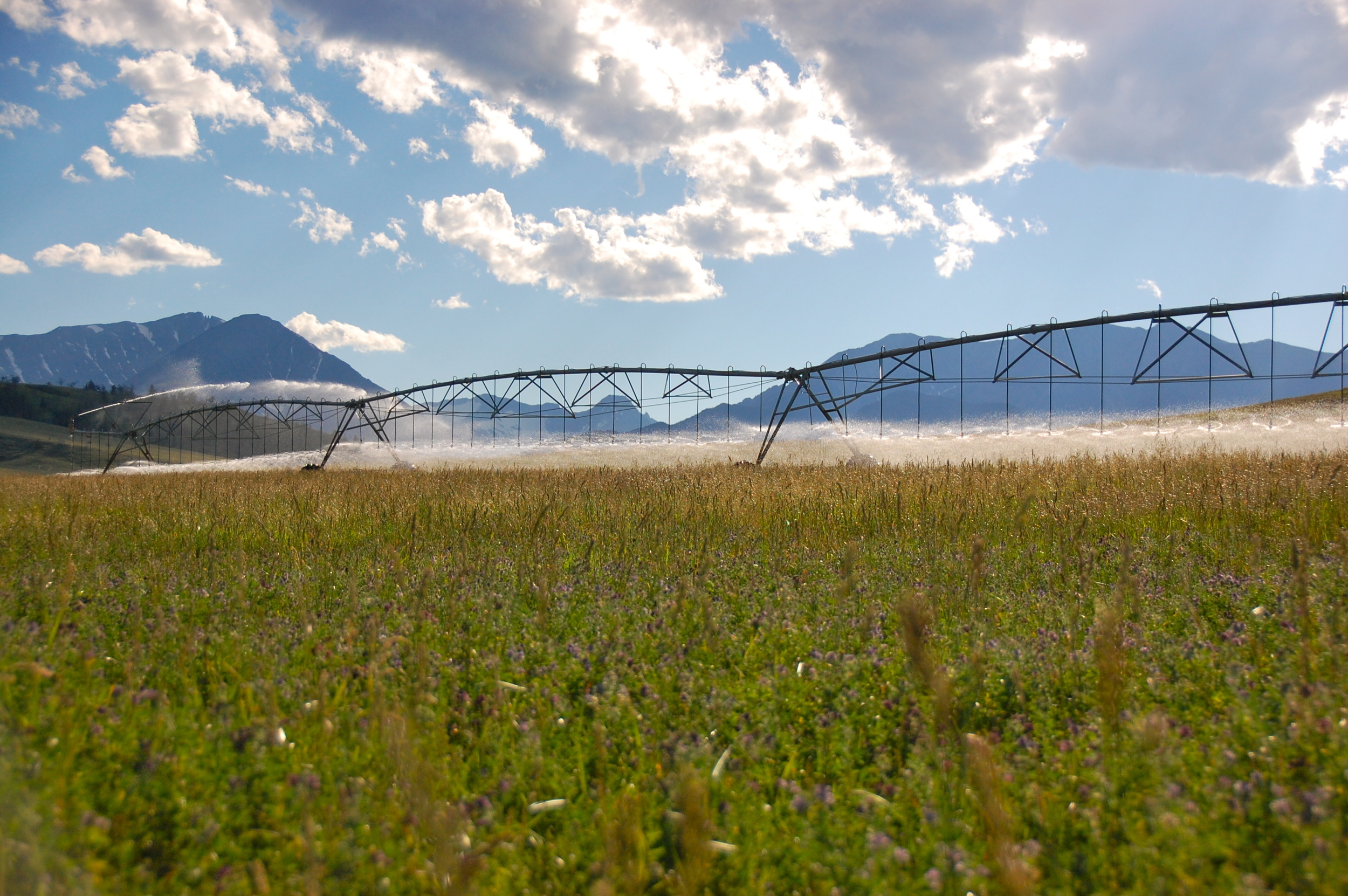 Pivots spread water on a Family Farm or Ranch in Montana