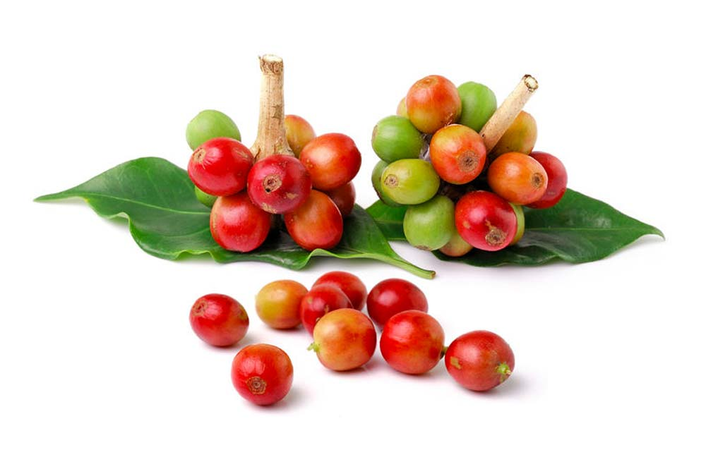 Coffee_Cherries_&_Leaf_sm.jpg