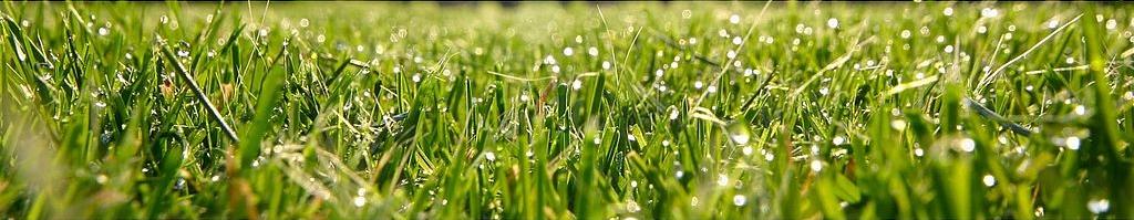 1024px-grass_9x6.jpg