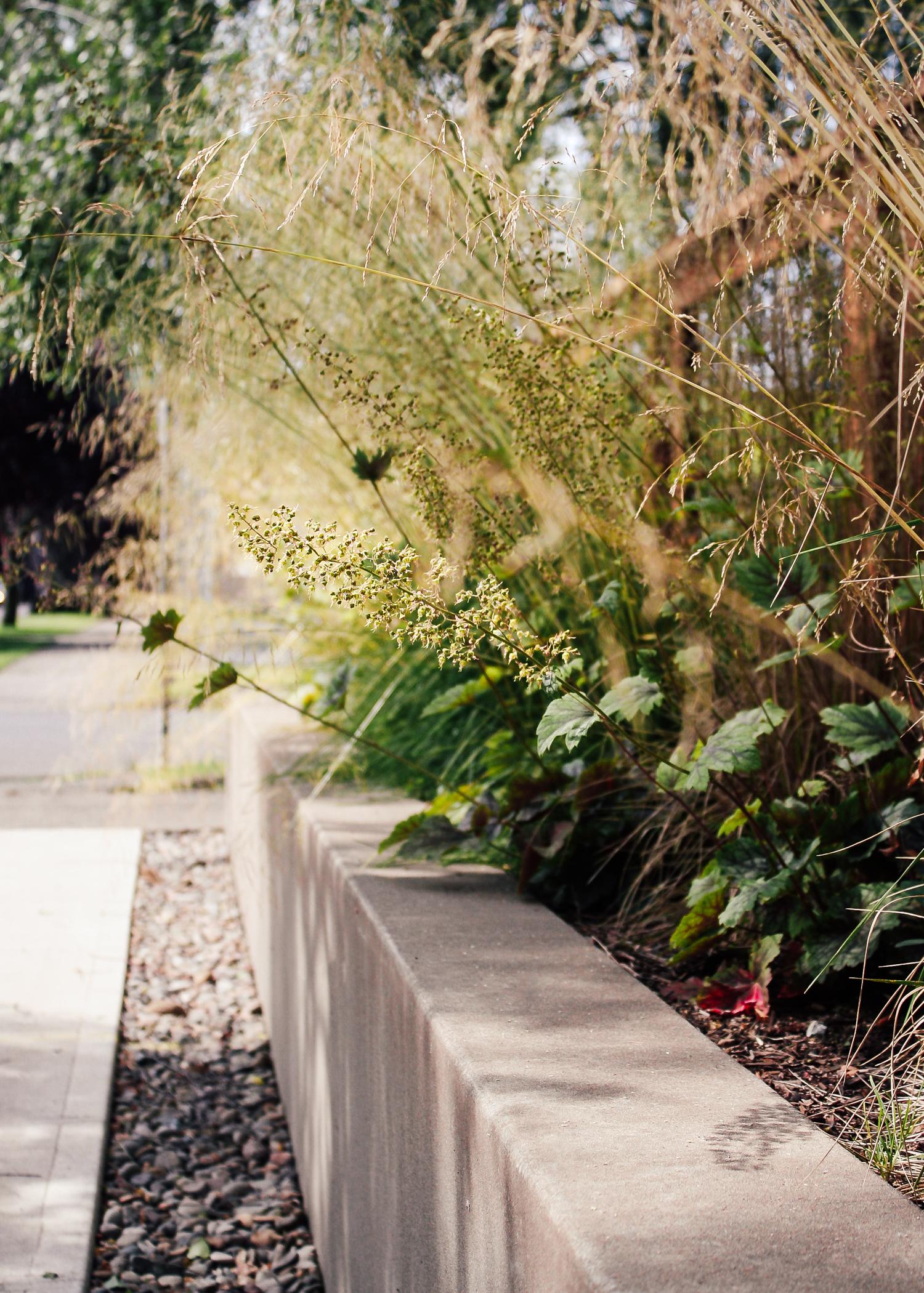 Rose City Park - Pistils Landscape Design-6.jpg