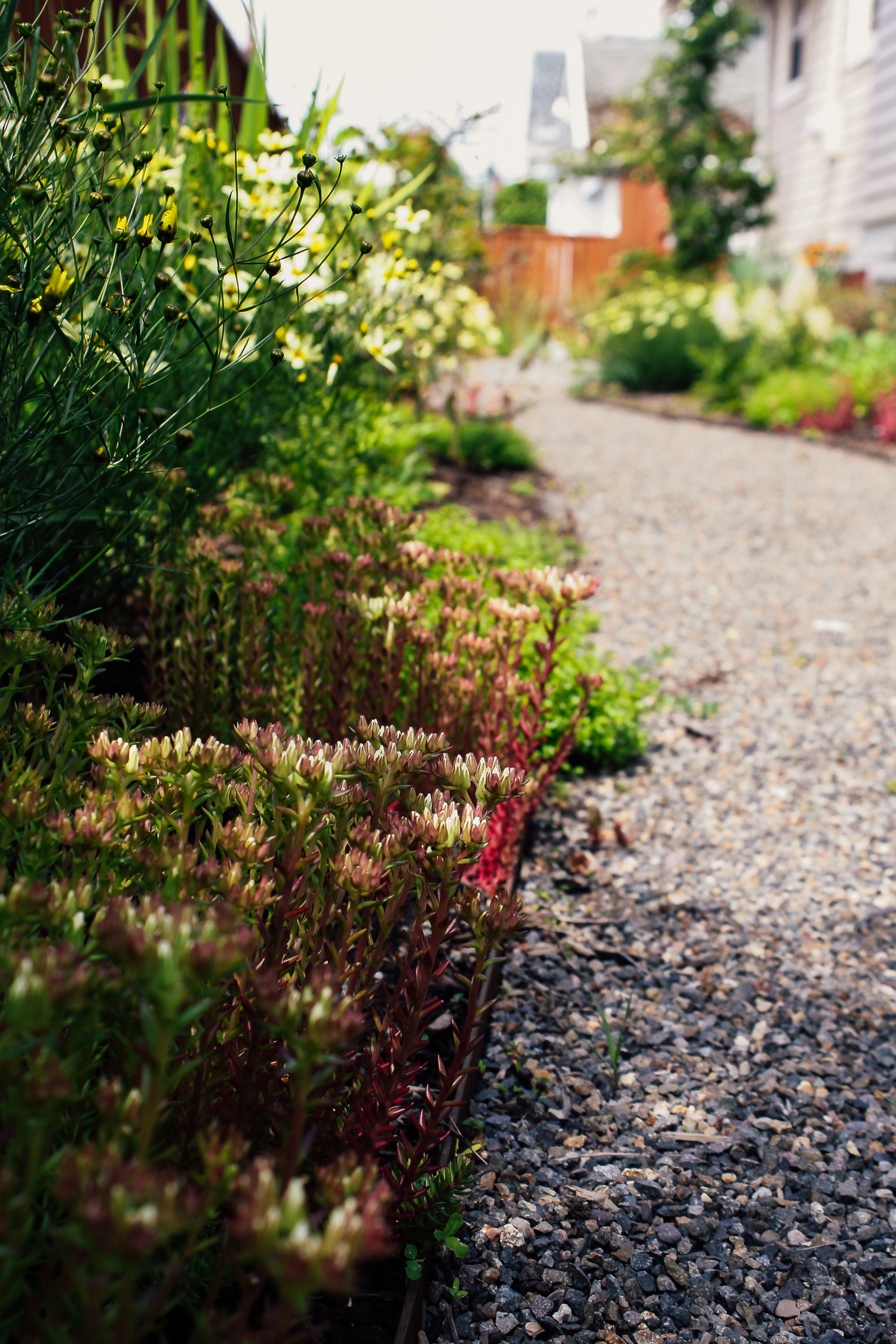 Rose City Park - Pistils Landscape Design-16.jpg