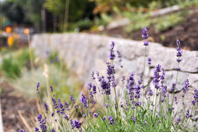 Multnomah Village - Pistils Landscape Design-3.jpg