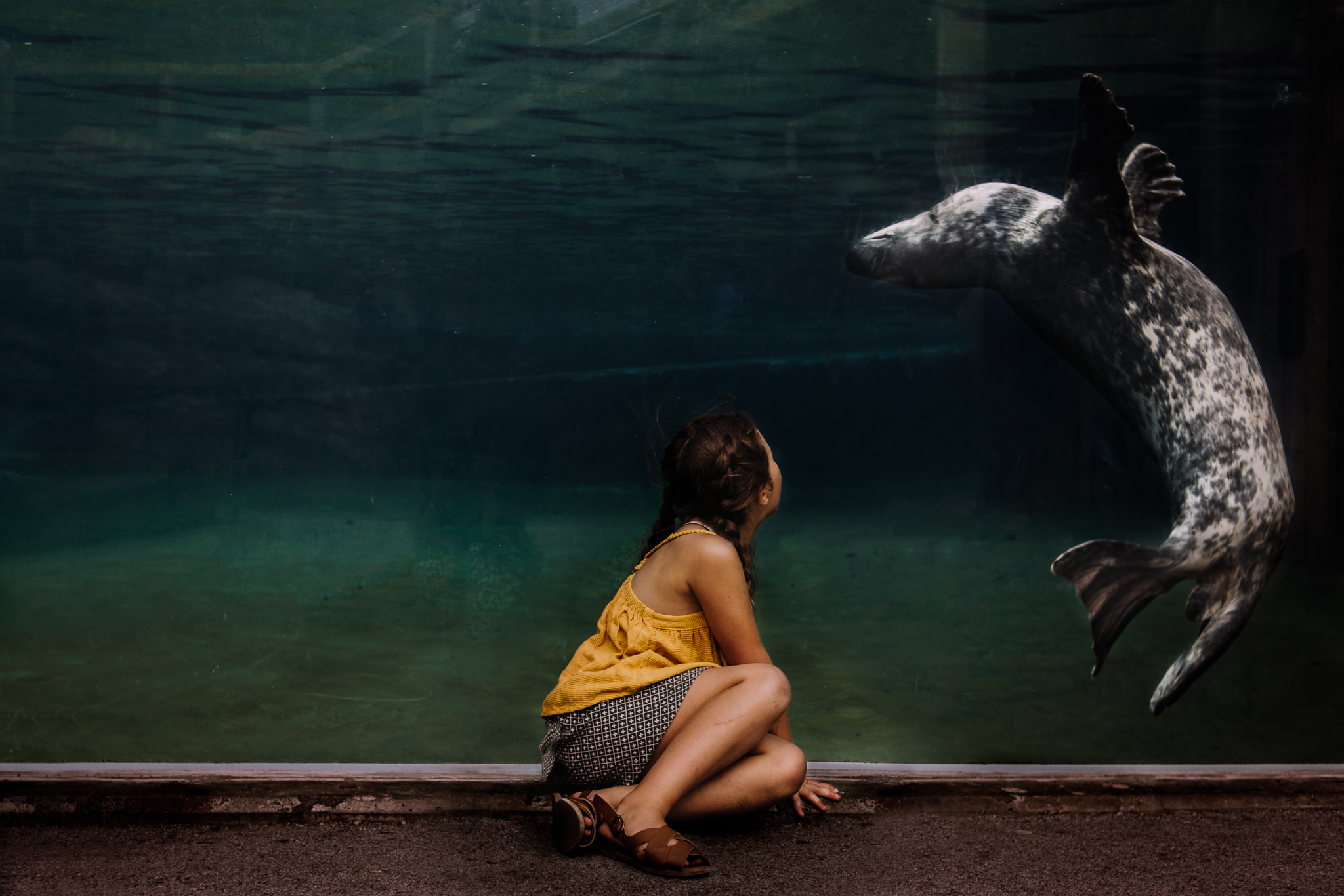 Sea Lion at Louisville Zoo