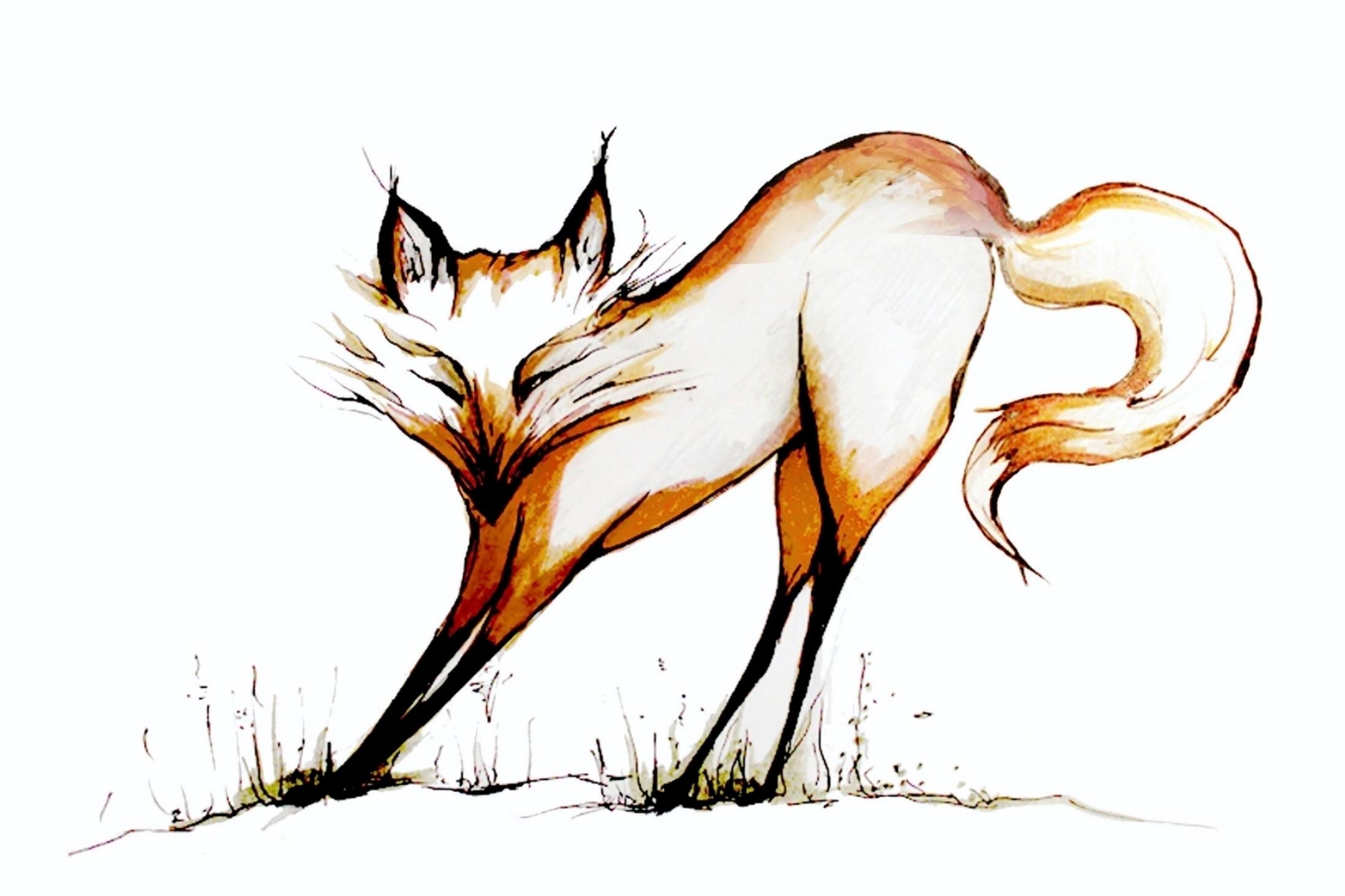 Fox-sleeping.jpg