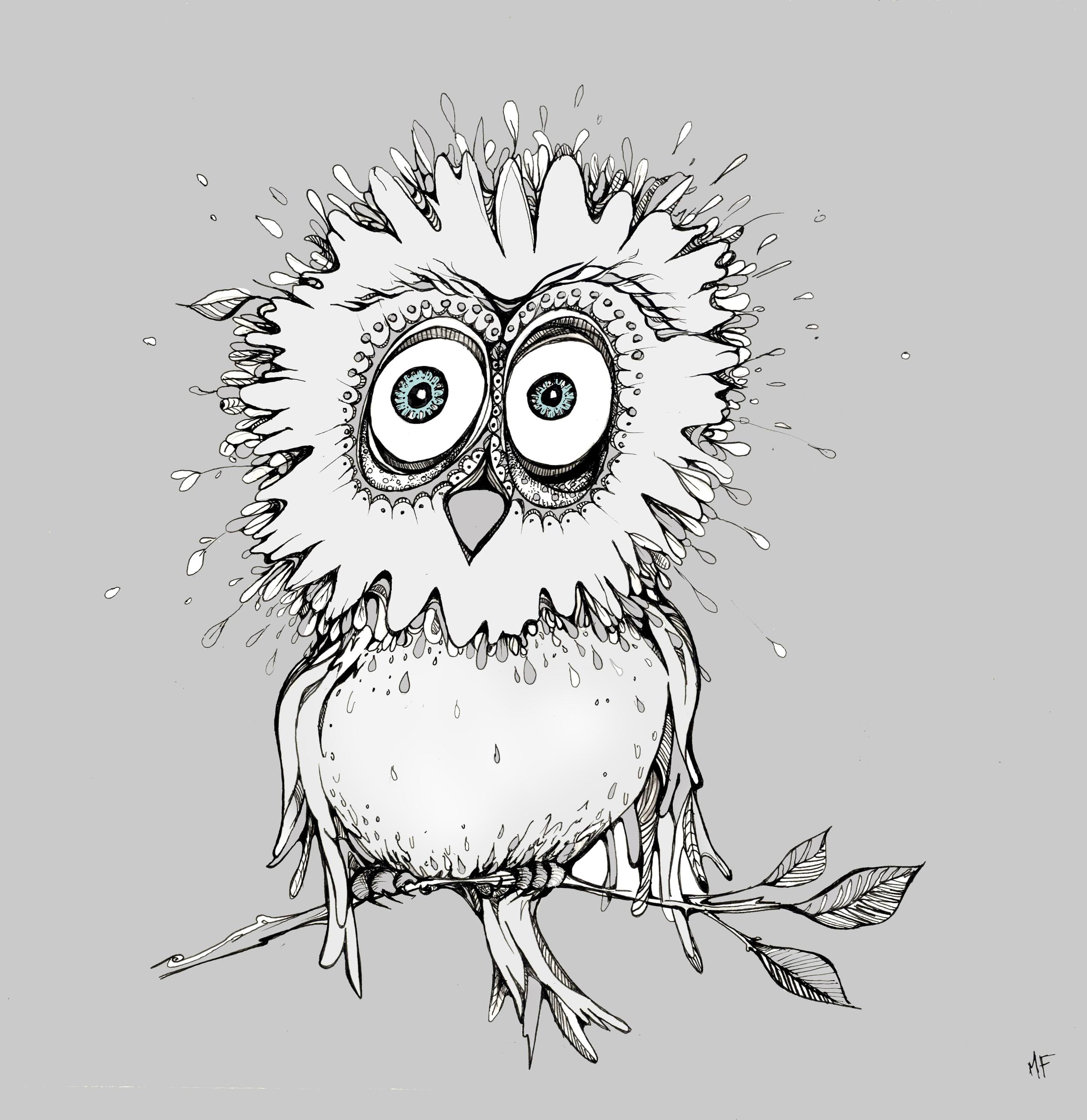 blue eyed owl-1.jpg
