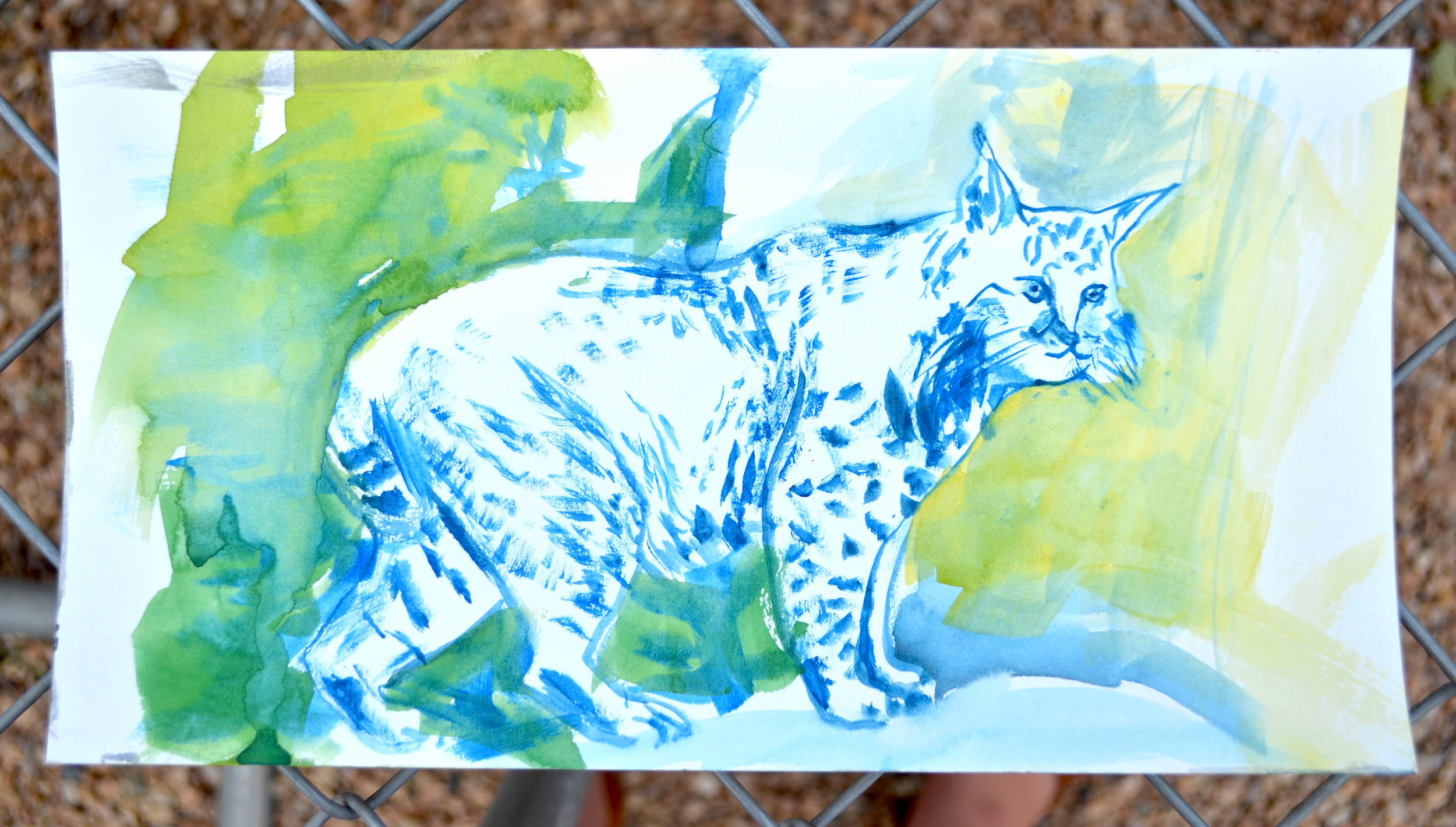 Kat Kinnick-Blue Bobcat-Gouache on Paper.JPG