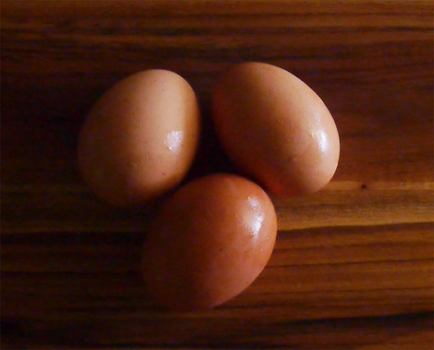 Hard-Boiled-Eggs.jpg