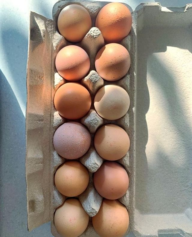 Proper eggs!🥚True, local eggs where nobody has tried to match the colours to make the whole dozen look the same... why do they do that? They're so much more beautiful this way!🧡⠀ ⠀ ⠀ ⠀ ⠀ ⠀ ⠀ ⠀ ⠀ ⠀ ⠀ ⠀ ⠀ ⠀ #nourishmewhole #holistichealthcoaching #holistichealth #consciousconsumerism #consciousconsumer #meetthemaker #naturalhealth #holistichealing #naturalremedies #herbalmedicine  #wellnessadvocate #naturalsolutions #naturalmedicine #herbalmedicine #naturalremedies #nourishbalancethrive #functionalnutrition #plantpowered #simplehealthyme #healingfoods #eattolive #mindsetshift #farmfresheggs #eatlocal #happyhens #eggfast ⠀