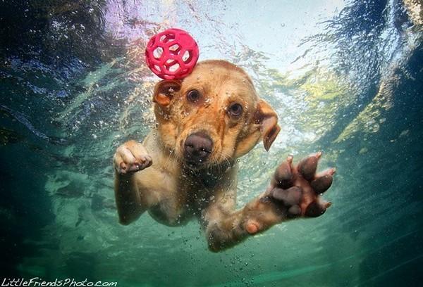 Seth-Casteel-Dogs12