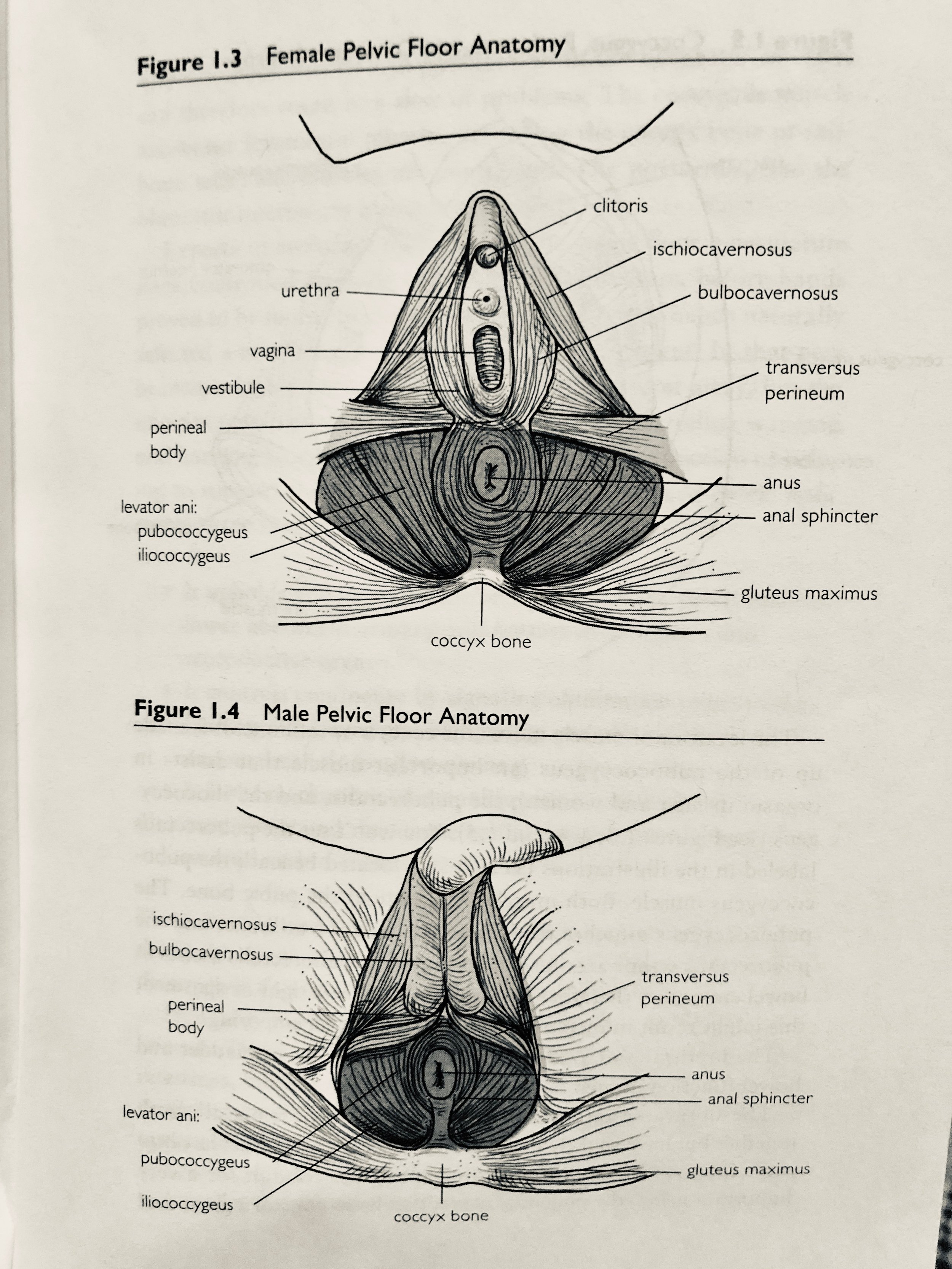 Image credit: Heal Pelvic Pain by Amy Stein, MPT