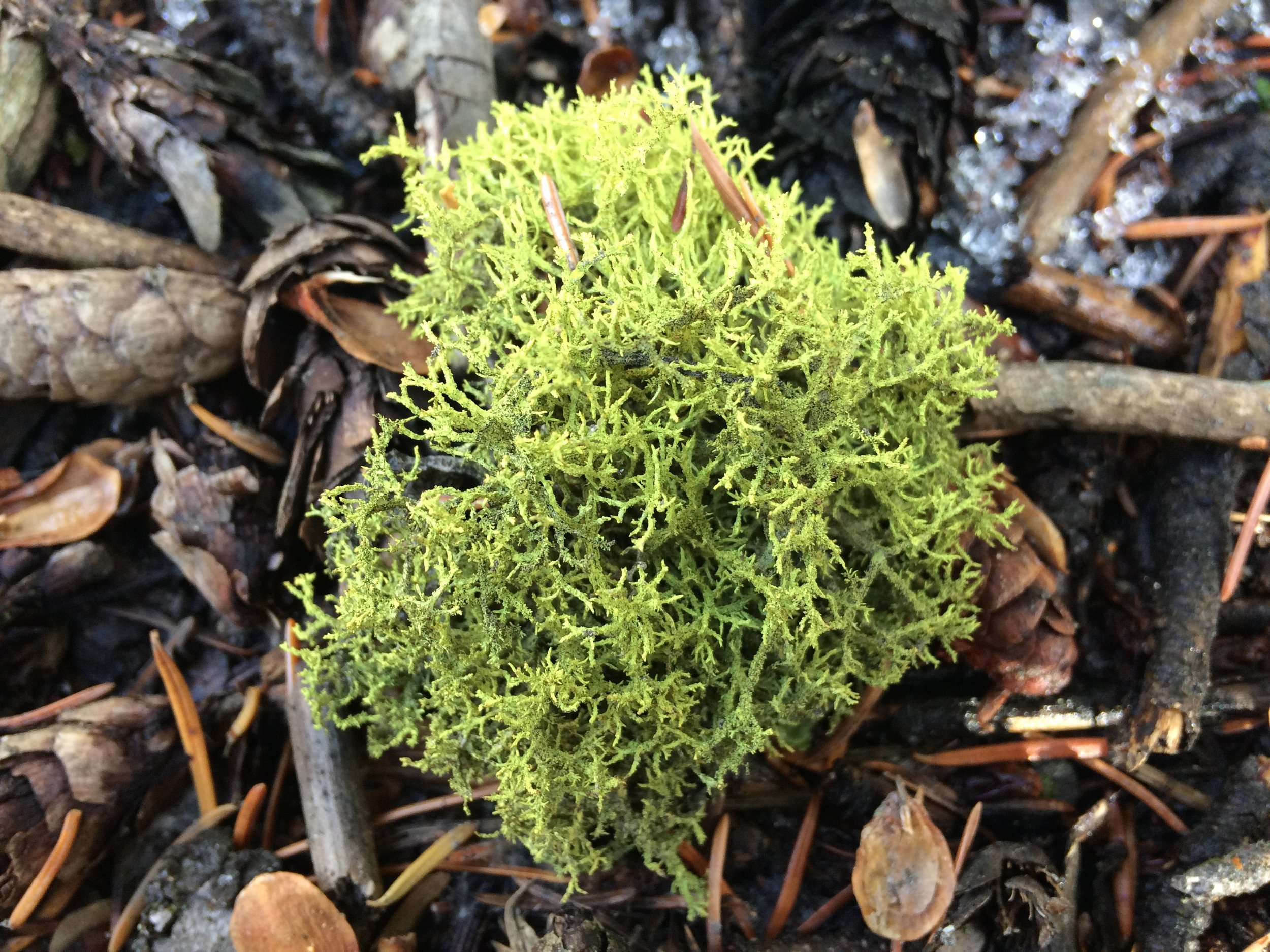 Moss, somatic experiencing offered by Courtney Wren Mabbutt, a therapist in Nelson, Castlegar, and the Slocan Valley.