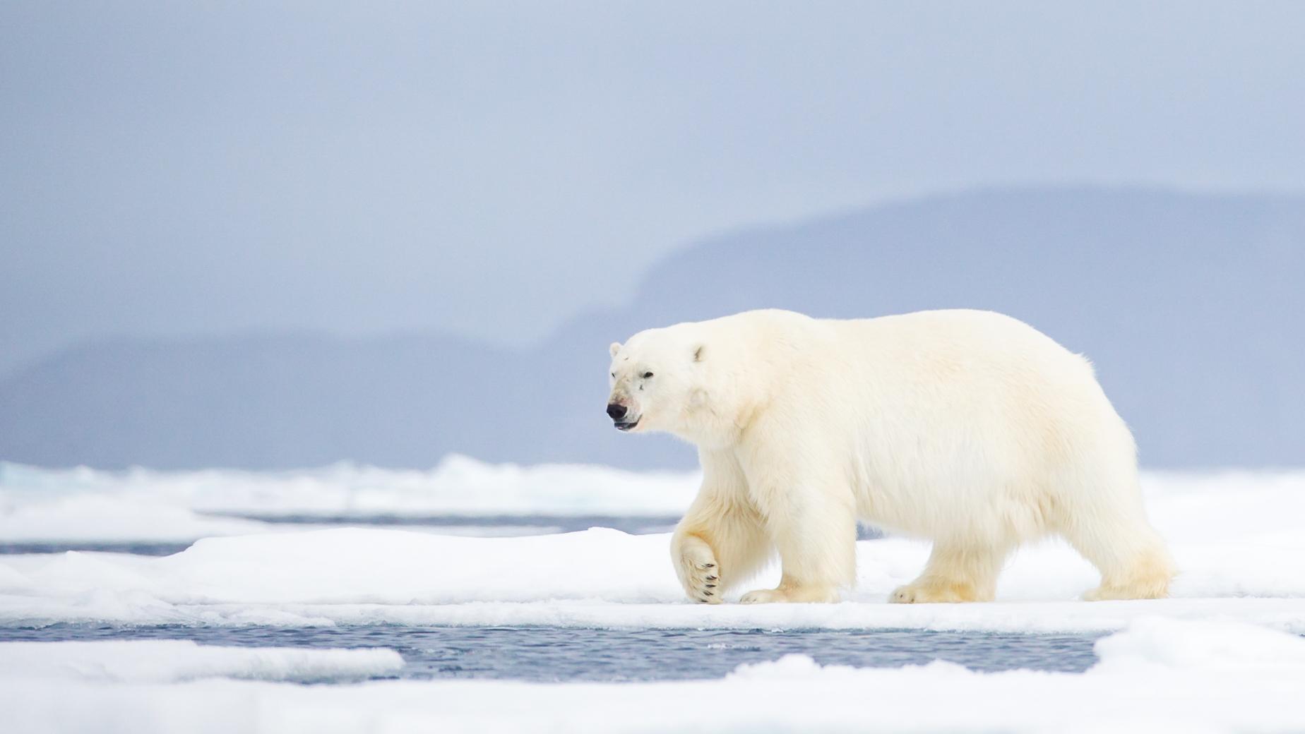 Svalbard - July 2013 -