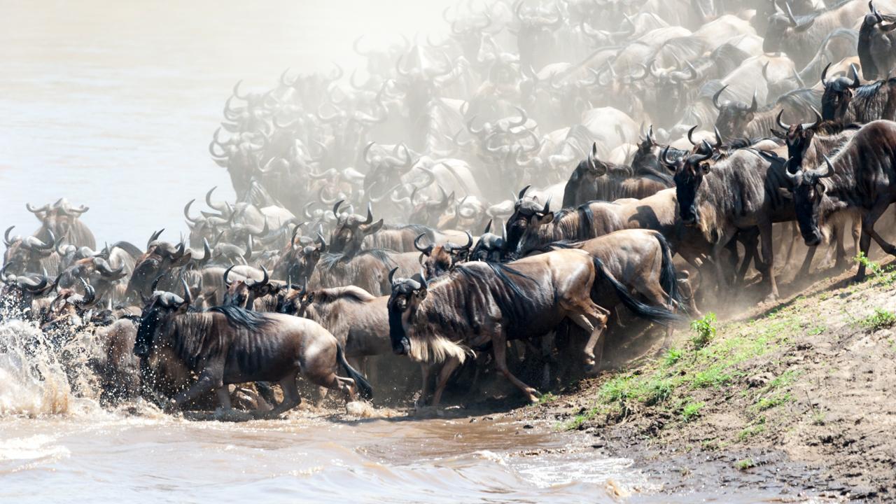 Masai Mara - August 2011 -