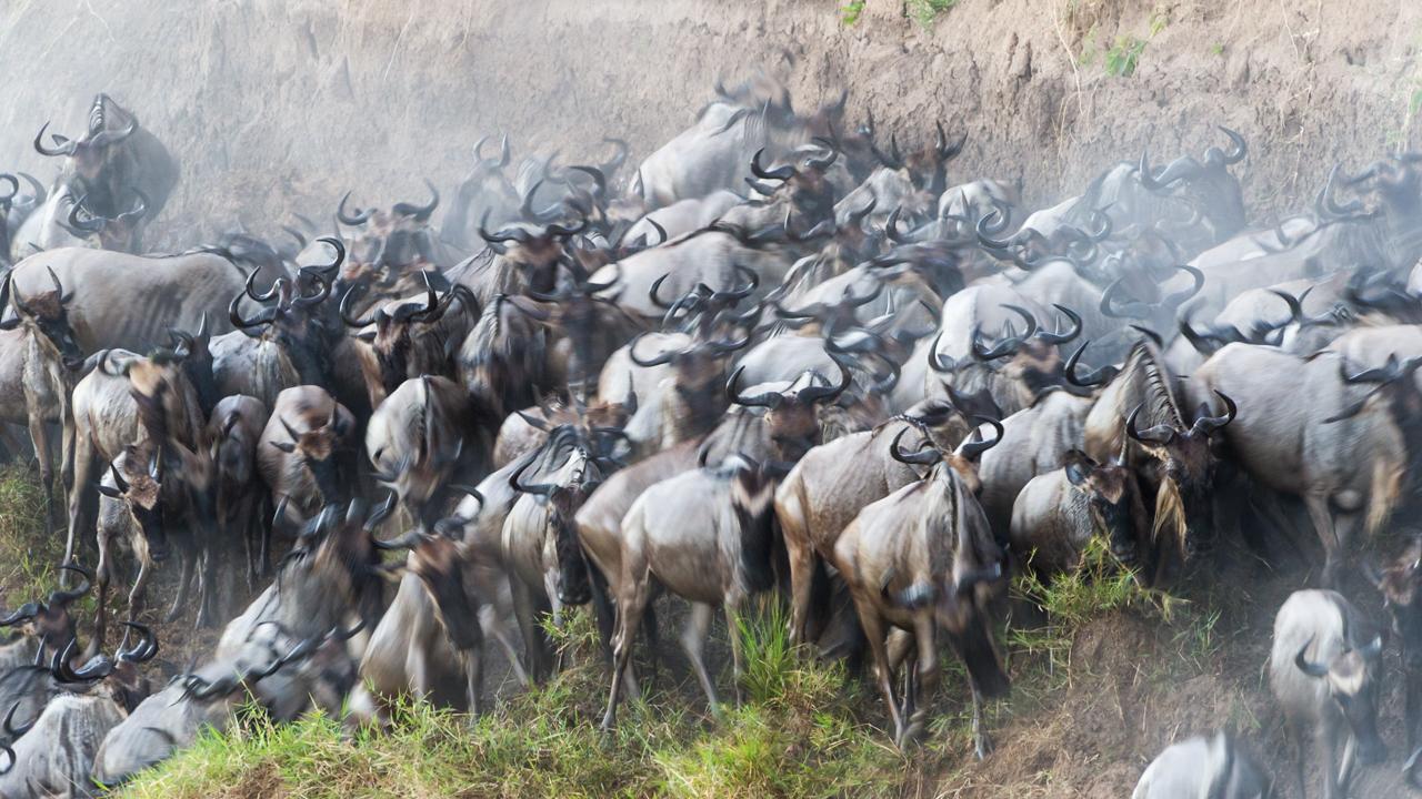 Masai Mara - August 2012 -