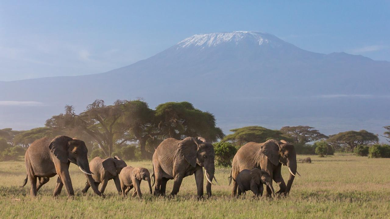 Amboseli - February 2013 -