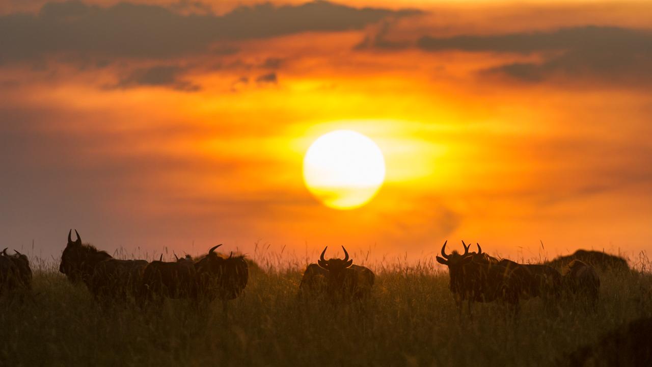 MasaiMara - February 2013 -