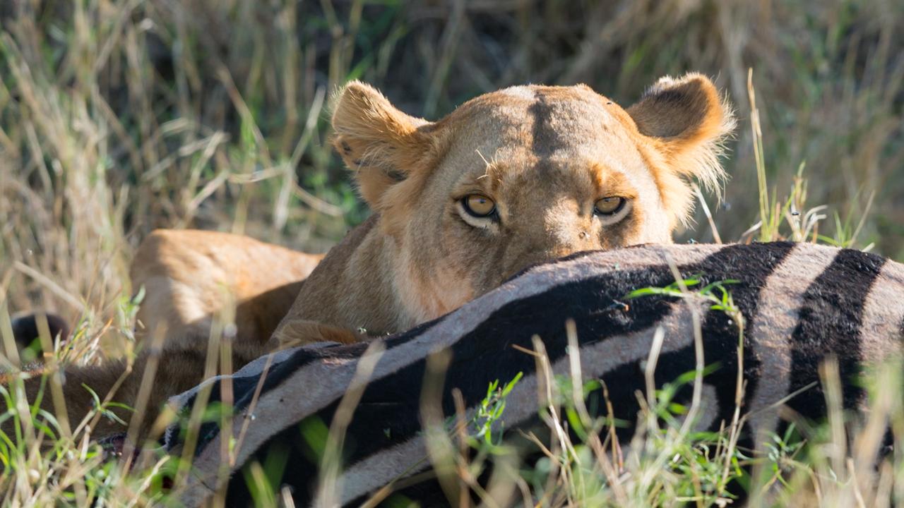MasaiMara - September 2013 -