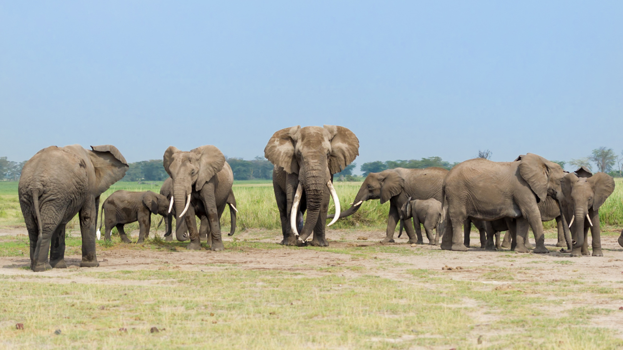 Amboseli - February 2014 -