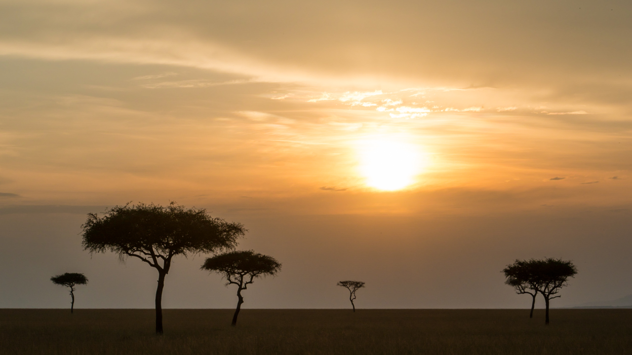 MasaiMara - February 2014 -