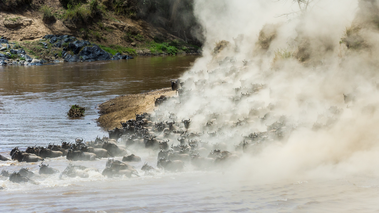 MasaiMara - August 2014 -