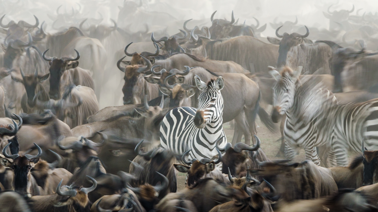 MasaiMara - September 2014 -