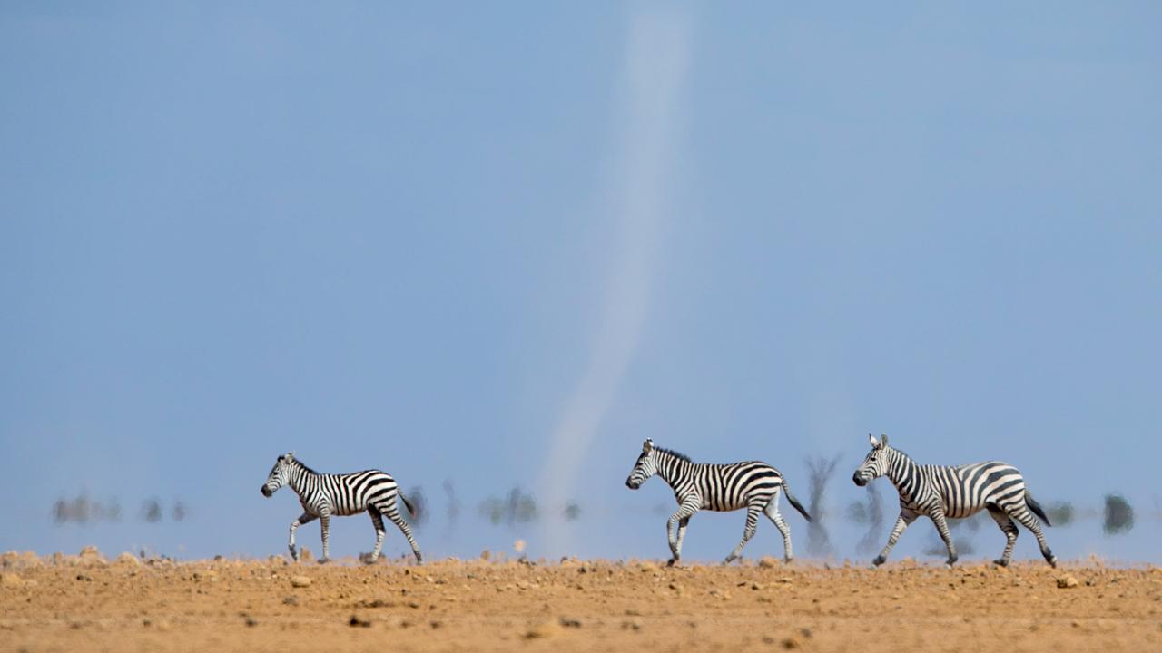 Amboseli - February 2015 -