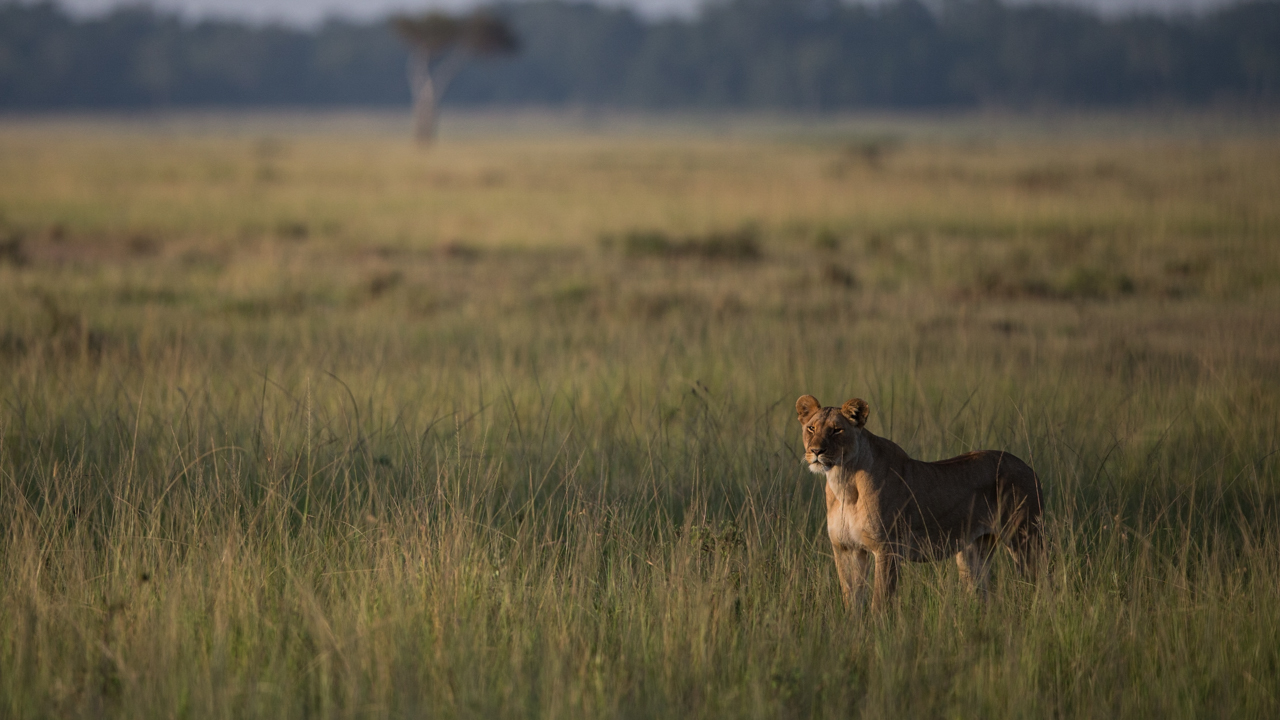 MasaiMara - February 2015 -