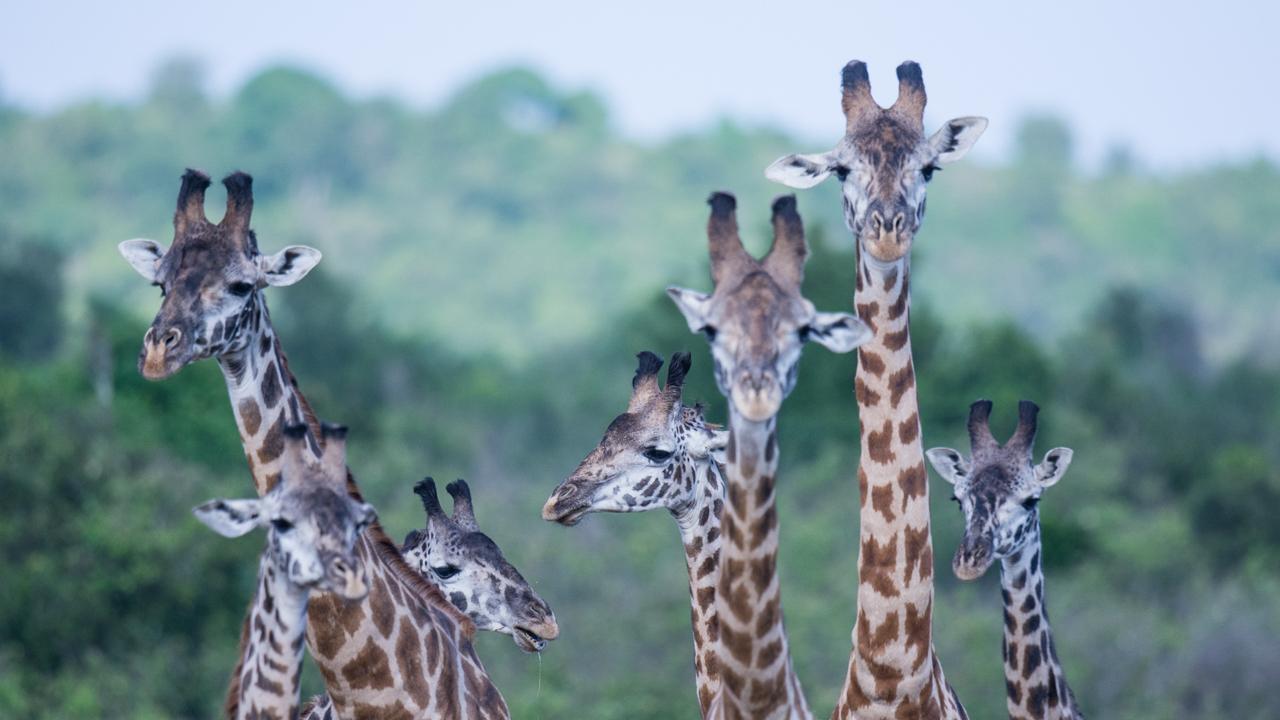MasaiMara - Jul 2015 -