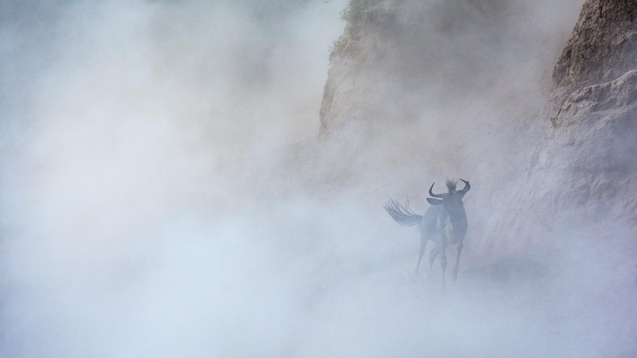 Masai Mara - September 2015 -