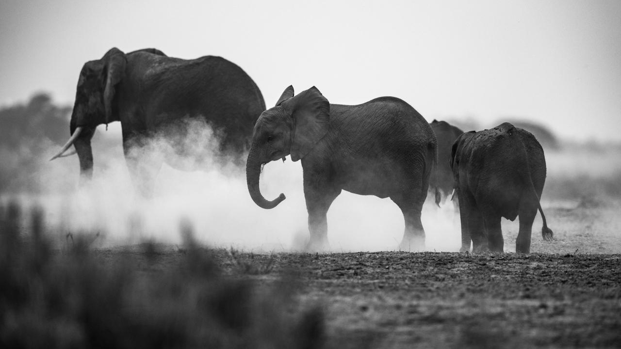 Amboseli - August 2016 -