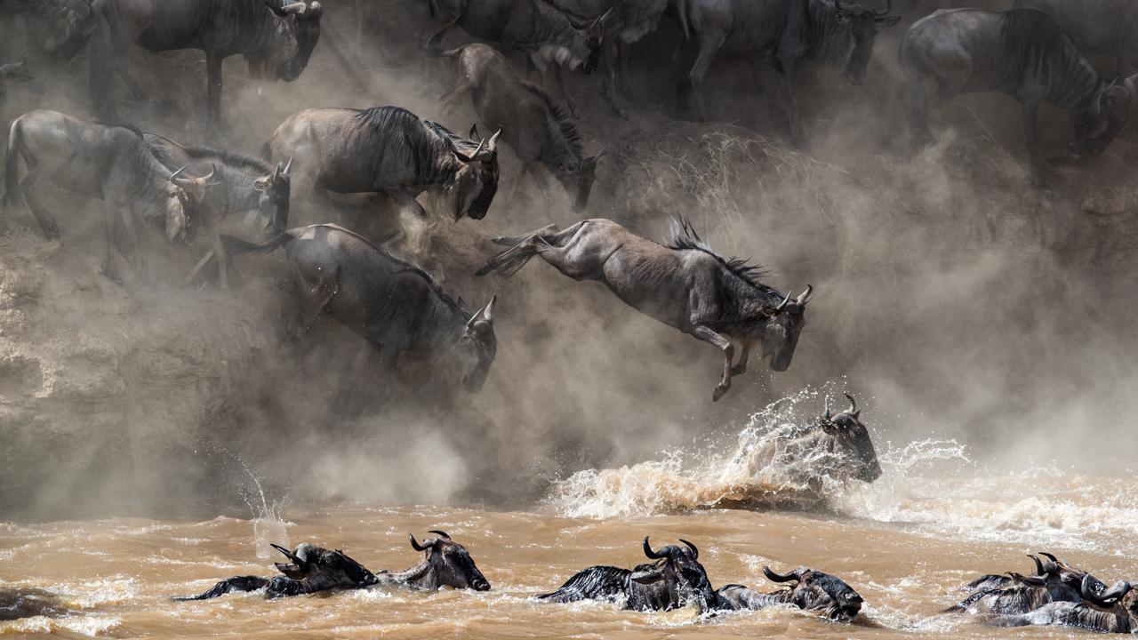 Masai Mara - August 2016 -